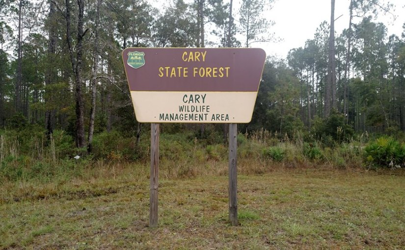 Cary State Forest and Campground